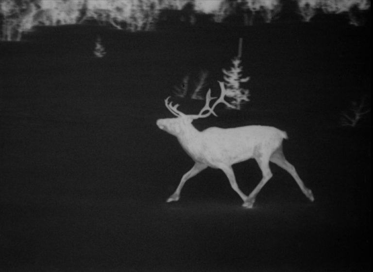 filmstill White Reindeer 21 sm