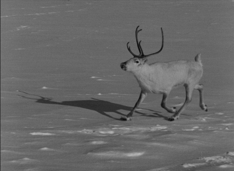 filmstill White Reindeer 40 sm